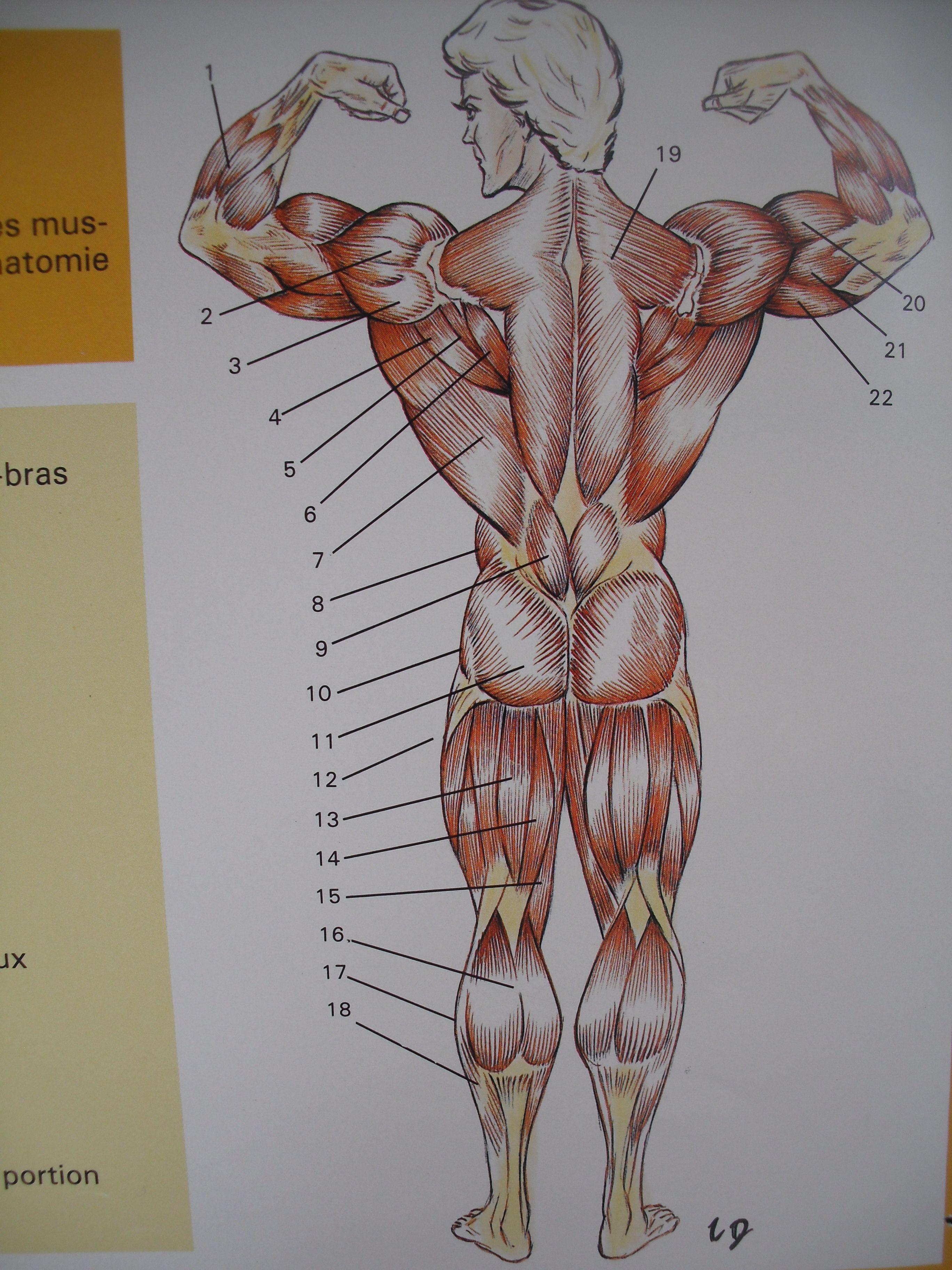 Histoire de la musculation - Musculation dessin ...